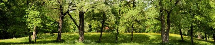 Englischer Garten im Mai