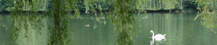 Header See und Schwan