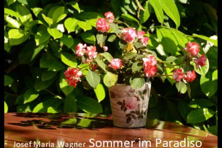 Sommer im Paradiso