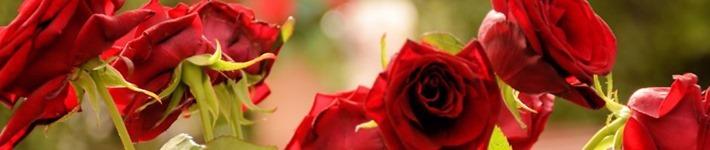 Header 940x198 - Blumengrüße vom Paradiso