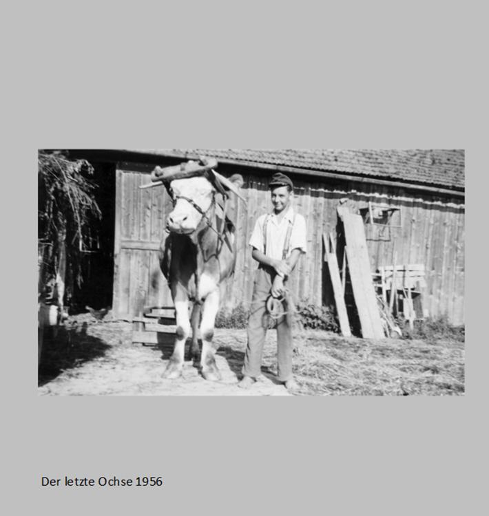 Der letzte Ochse in Ottmaring 1956