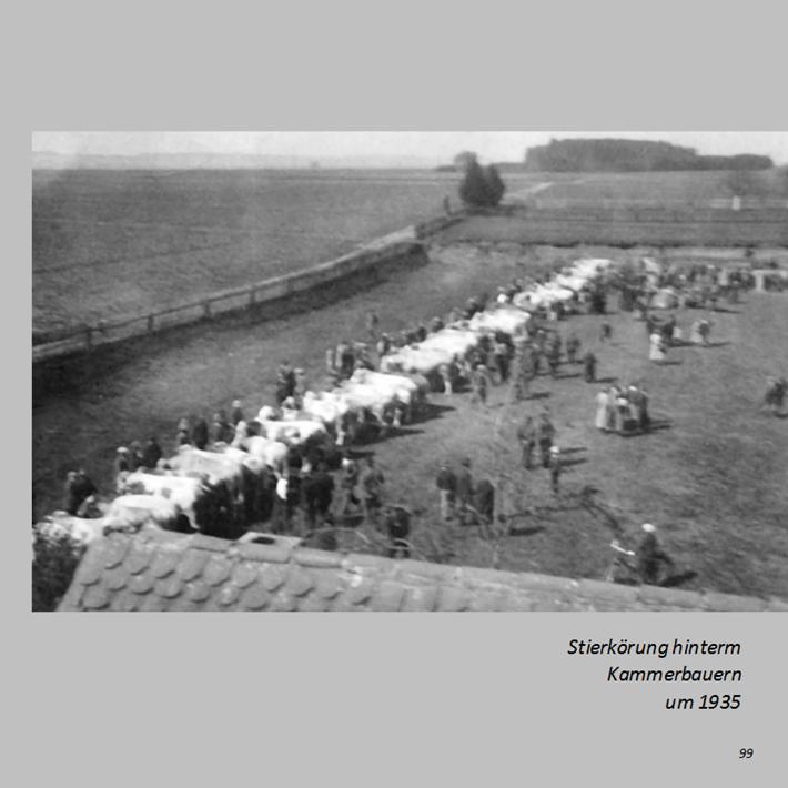 Stierkörung hinterm Kammerbauern in Ottmaring um 1935