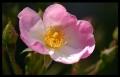 Blumengrüße 004