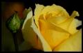 Blumengrüße 006