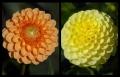 Blumengrüße 008