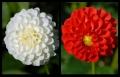 Blumengrüße 009