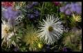 Blumengrüße 010