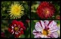 Blumengrüße 011