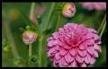 Blumengrüße 012