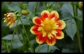 Blumengrüße 013