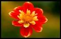 Blumengrüße 014