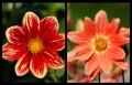Blumengrüße 015
