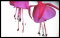 Blumengrüße 016