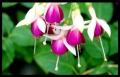 Blumengrüße 018