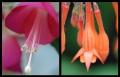 Blumengrüße 019