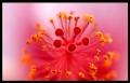 Blumengrüße 020