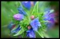 Blumengrüße 022
