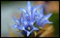 Blumengrüße 023