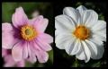 Blumengrüße 024