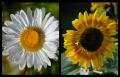Blumengrüße 025