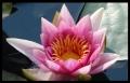 Blumengrüße 026