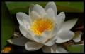 Blumengrüße 027