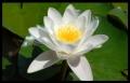 Blumengrüße 028