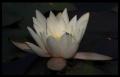 Blumengrüße 029