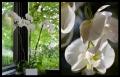 Blumengrüße 039