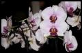 Blumengrüße 040