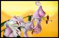 Blumengrüße 041