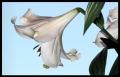 Blumengrüße 042