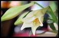 Blumengrüße 043