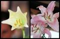 Blumengrüße 044