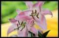 Blumengrüße 045