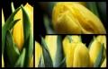 Blumengrüße 047