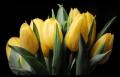 Blumengrüße 048