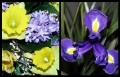 Blumengrüße 049