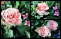 Blumengrüße 053