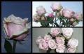 Blumengrüße 055