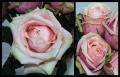 Blumengrüße 056