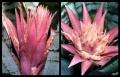 Blumengrüße 057