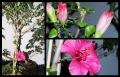 Blumengrüße 059