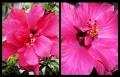 Blumengrüße 060
