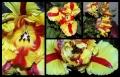 Blumengrüße 061