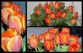 Blumengrüße 063
