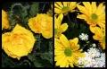 Blumengrüße 065