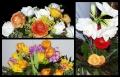 Blumengrüße 066