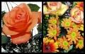 Blumengrüße 068