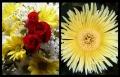 Blumengrüße 070